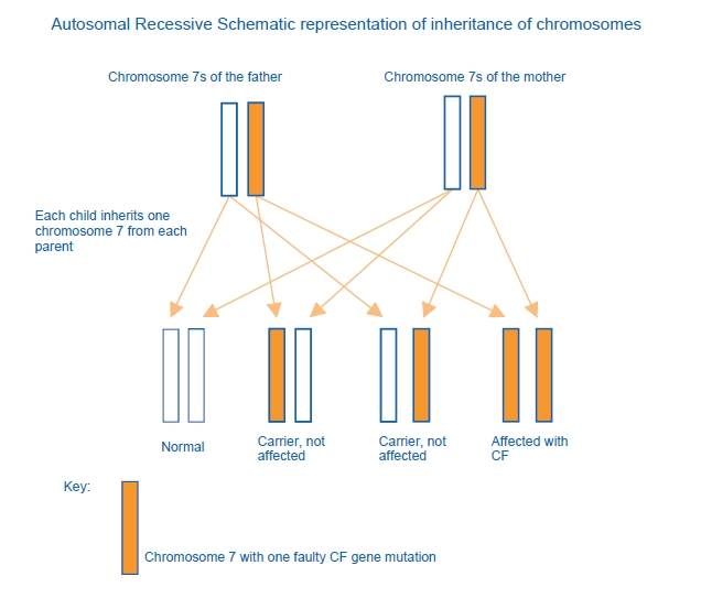 inheritance of chromosomes